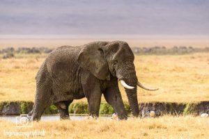 Fotoreise Tansania