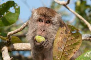 Fotoreise Borneo / Malaysia